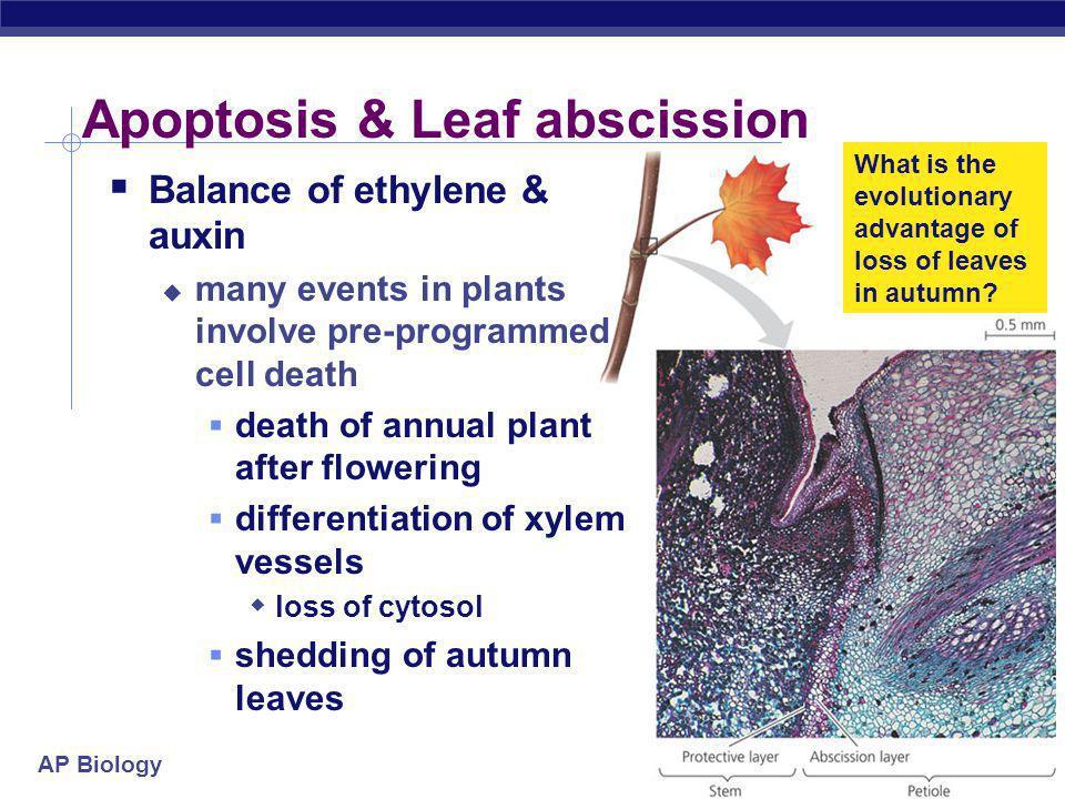 Apoptosis & Leaf abscission