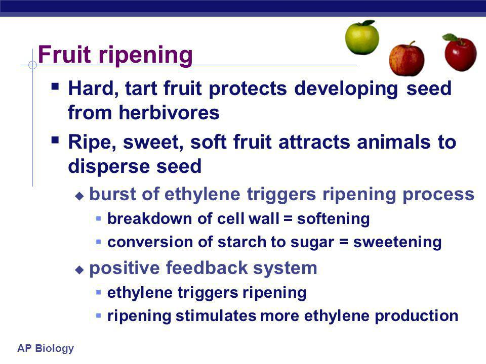 Fruit ripening Hard, tart fruit protects developing seed from herbivores. Ripe, sweet, soft fruit attracts animals to disperse seed.