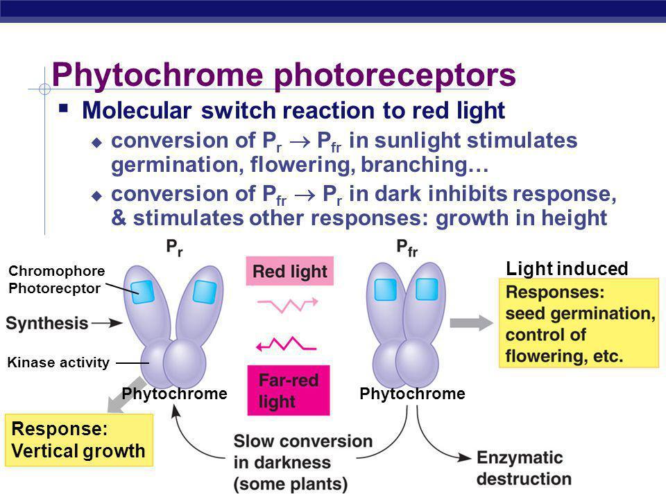Phytochrome photoreceptors