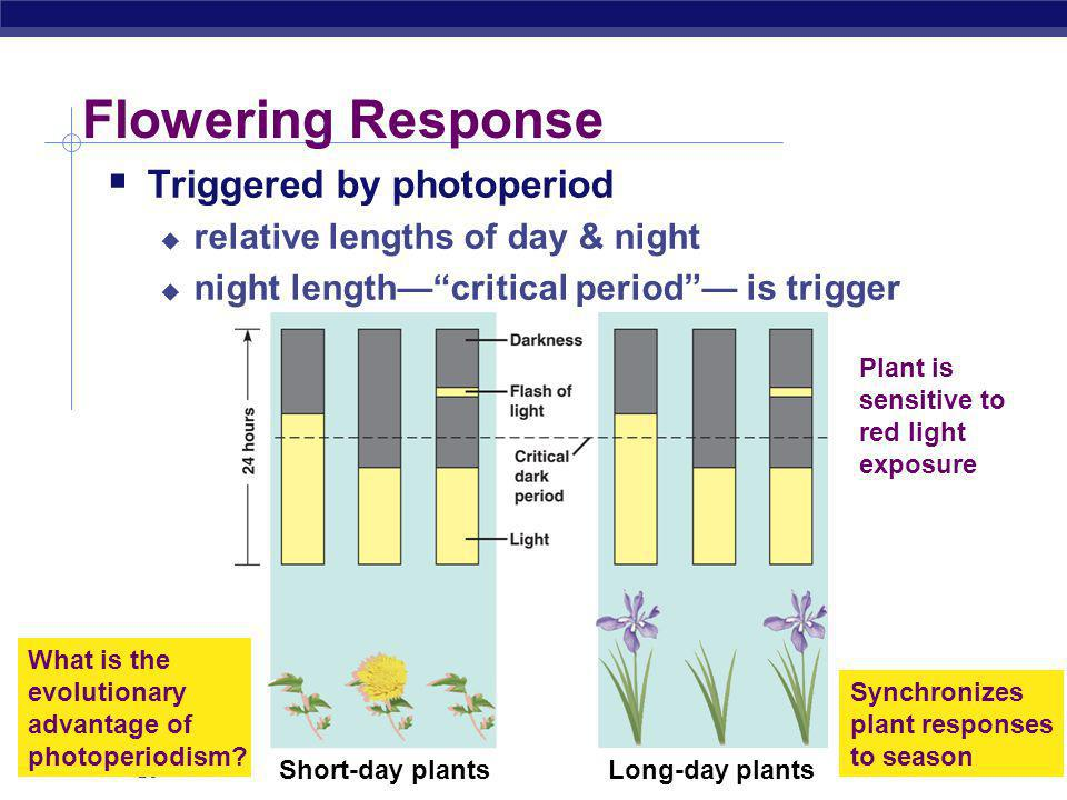 Flowering Response Triggered by photoperiod