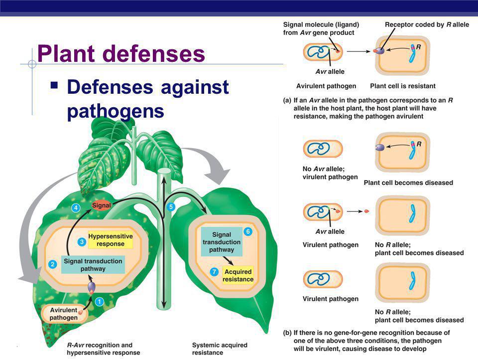 Plant defenses Defenses against pathogens