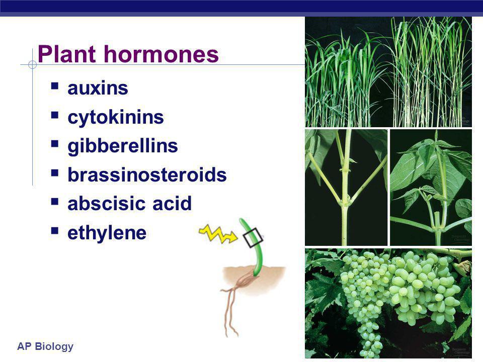 Plant hormones auxins cytokinins gibberellins brassinosteroids