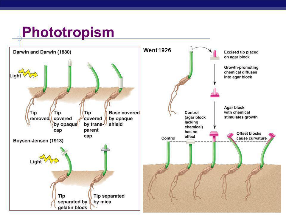 Phototropism Went 1926 Growth towards light