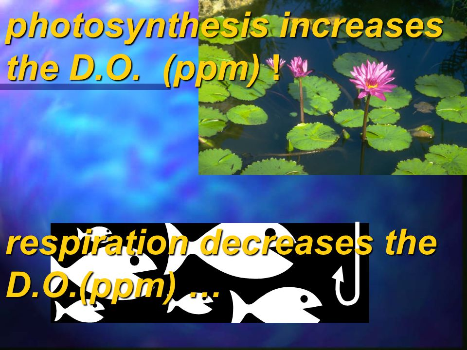 photosynthesis increases the D.O. (ppm) !