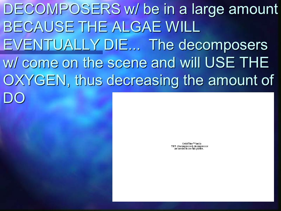 DECOMPOSERS w/ be in a large amount BECAUSE THE ALGAE WILL EVENTUALLY DIE...