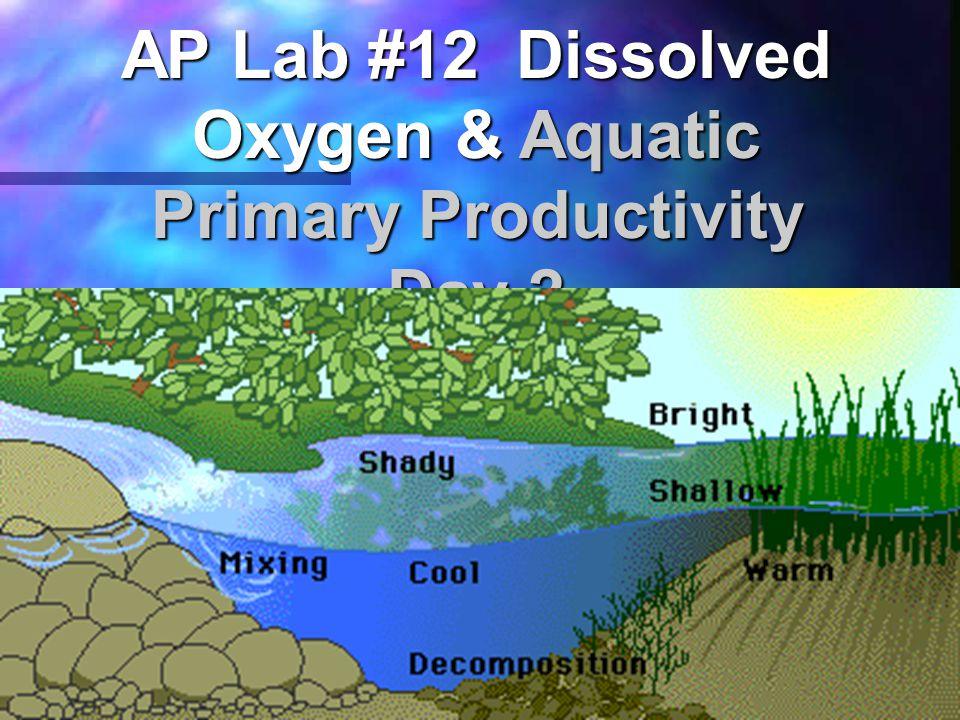 AP Lab #12 Dissolved Oxygen & Aquatic Primary Productivity Day 2