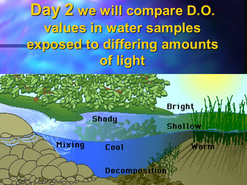 Day 2 we will compare D.O. values in water samples exposed to differing amounts of light