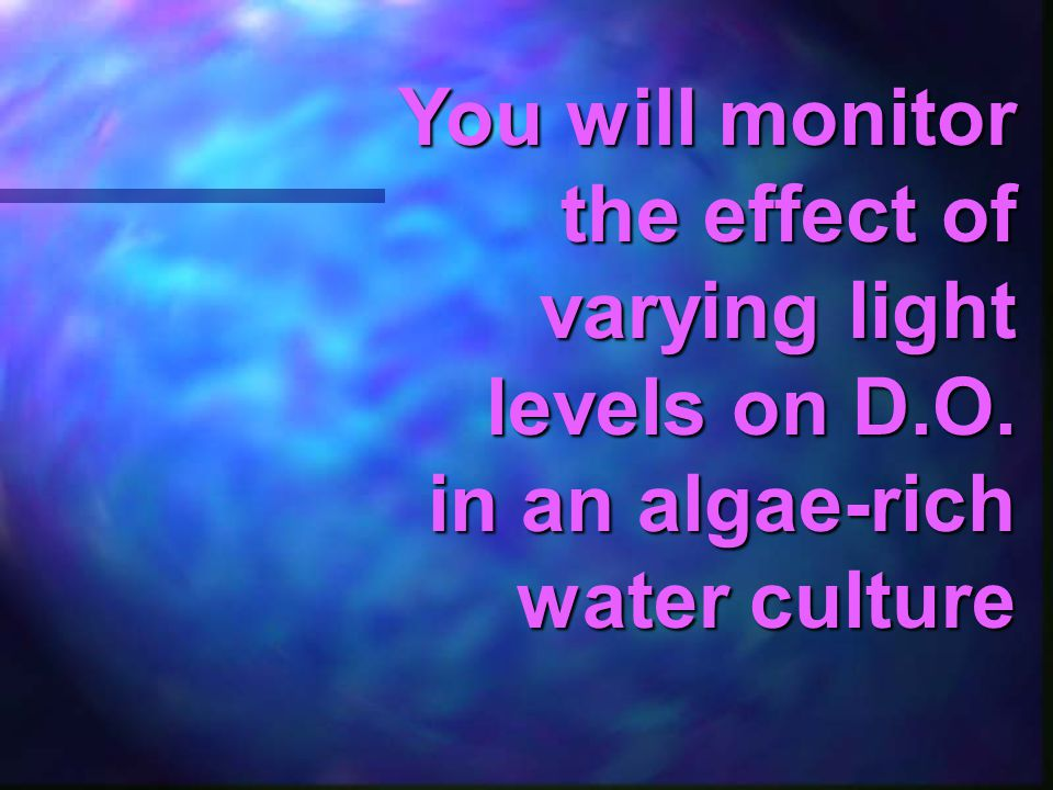 You will monitor the effect of varying light levels on D. O