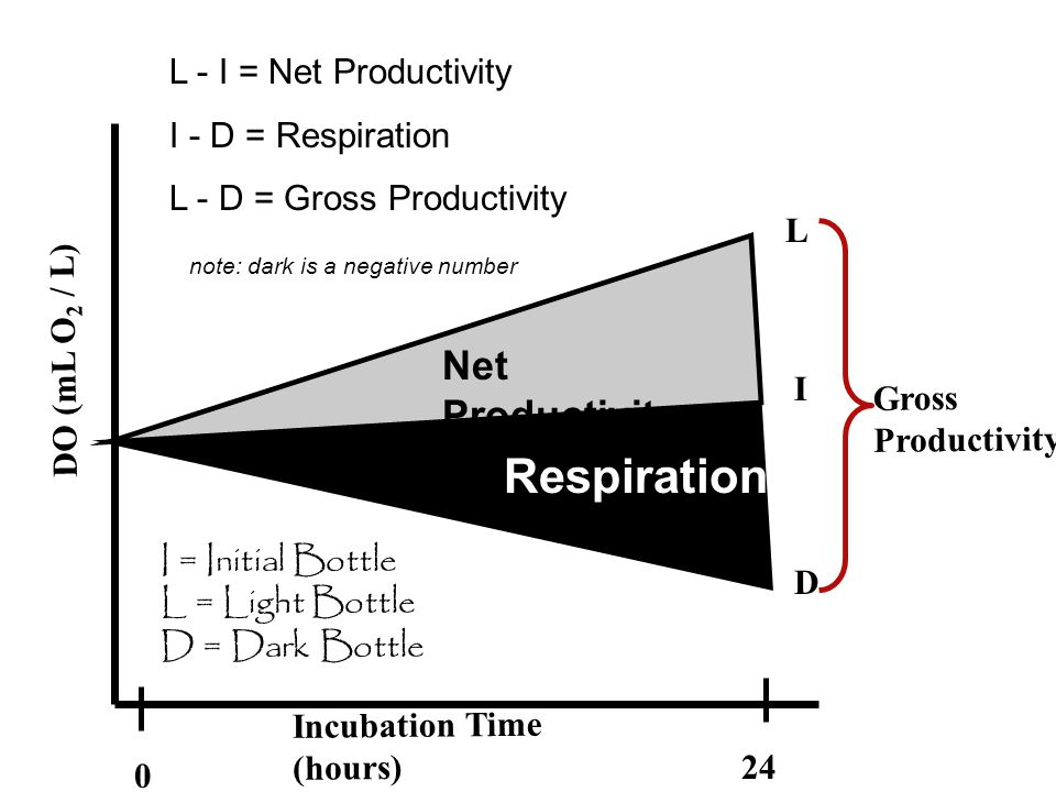 Respiration Net Productivity L - I = Net Productivity