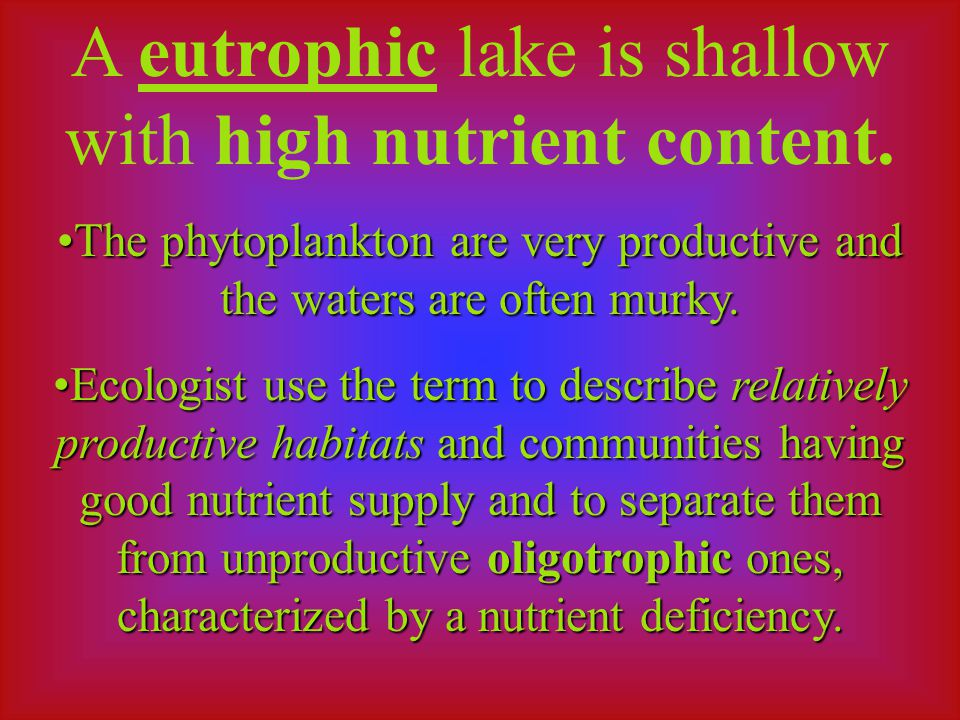A eutrophic lake is shallow with high nutrient content.