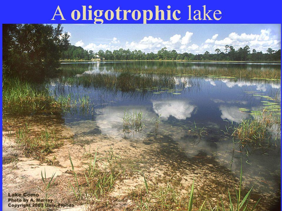 A oligotrophic lake