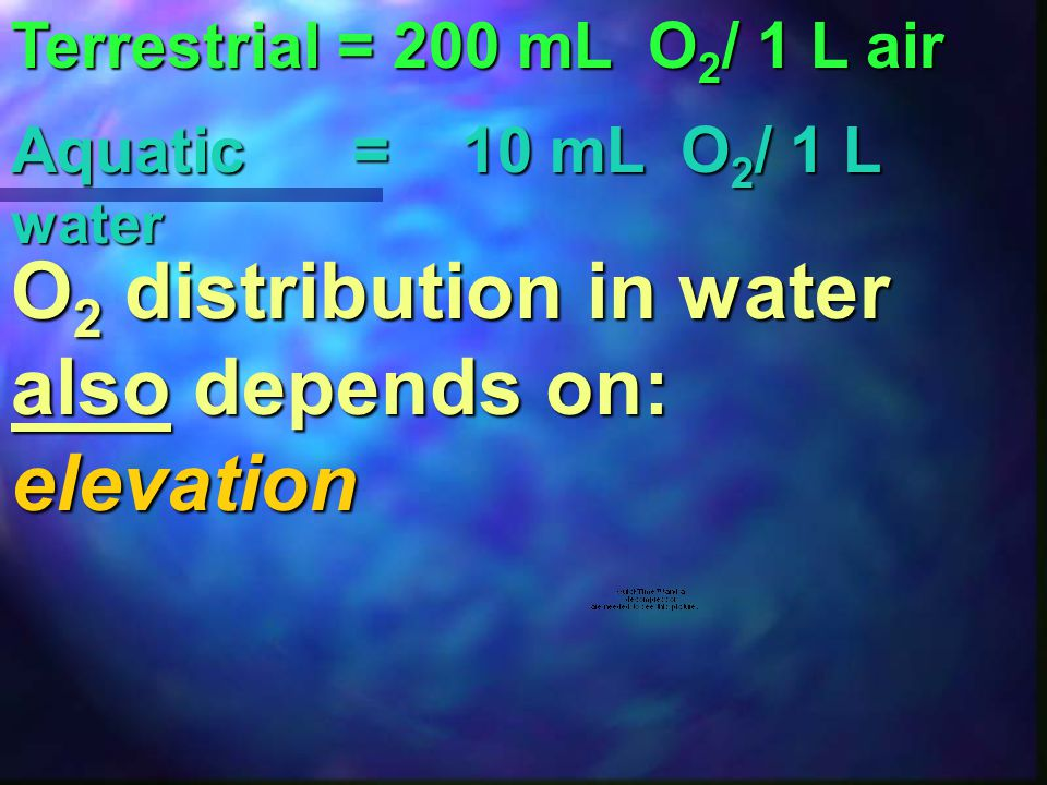 O2 distribution in water also depends on: elevation