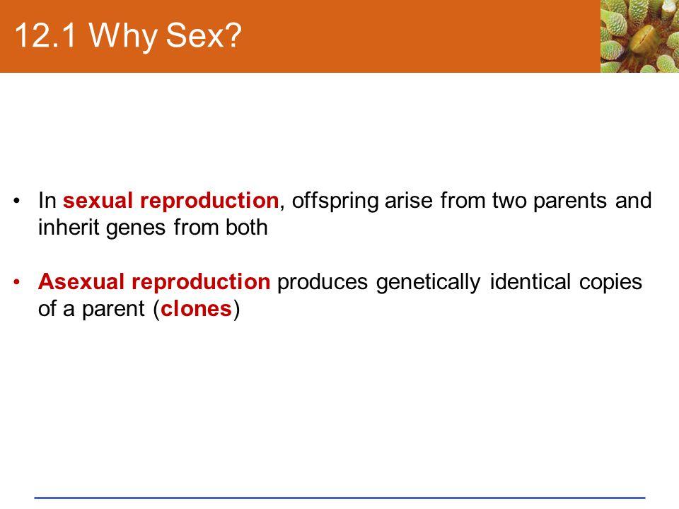 12.1 Why Sex In sexual reproduction, offspring arise from two parents and inherit genes from both.