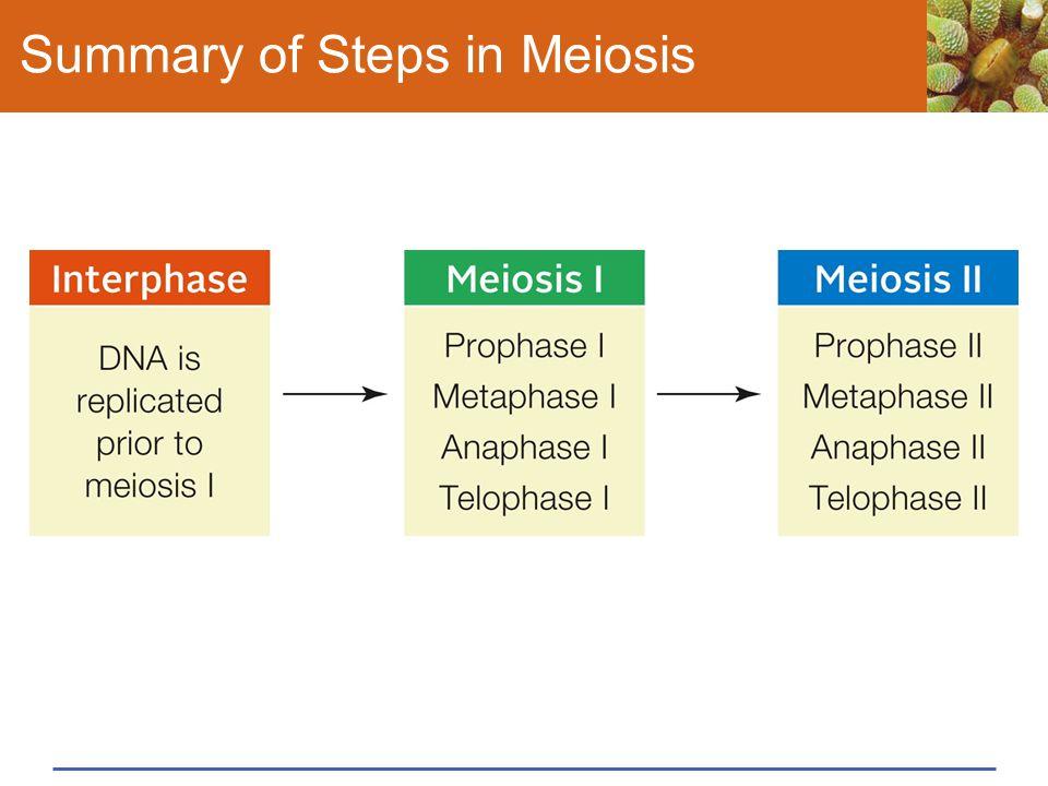 Summary of Steps in Meiosis