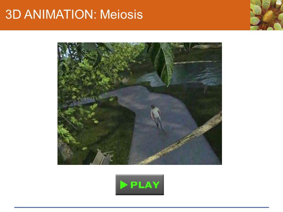 3D ANIMATION: Meiosis
