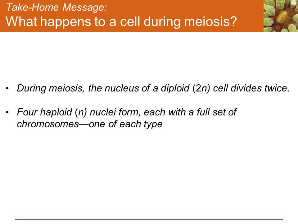 Take-Home Message: What happens to a cell during meiosis