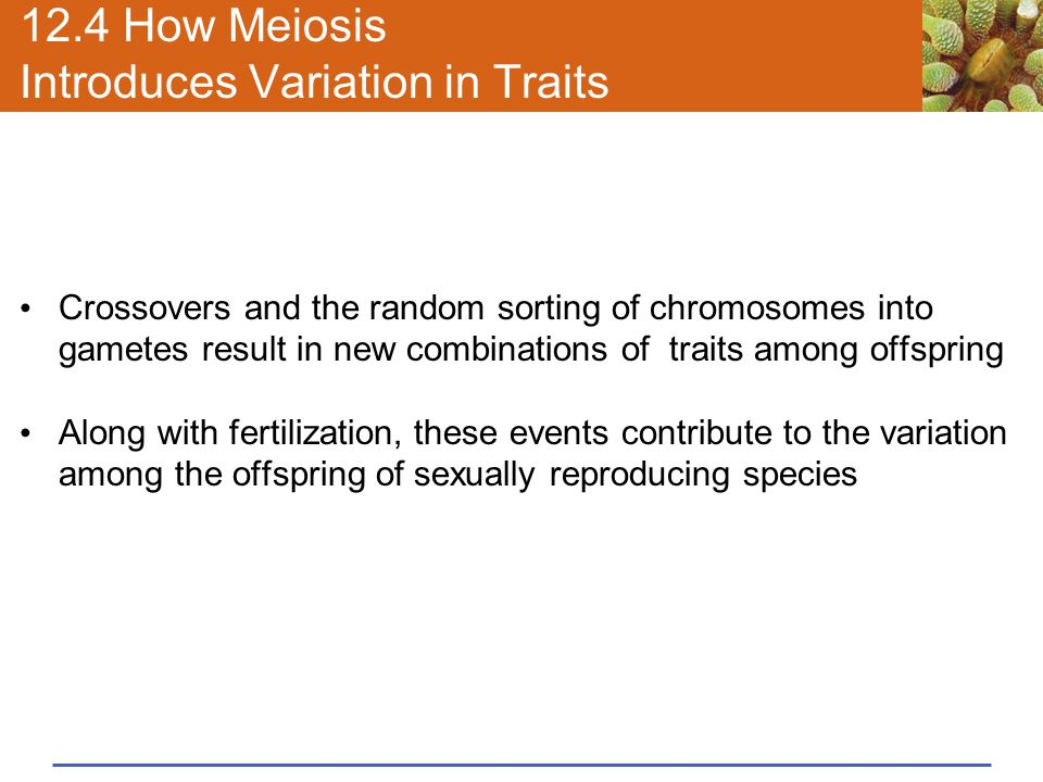 12.4 How Meiosis Introduces Variation in Traits