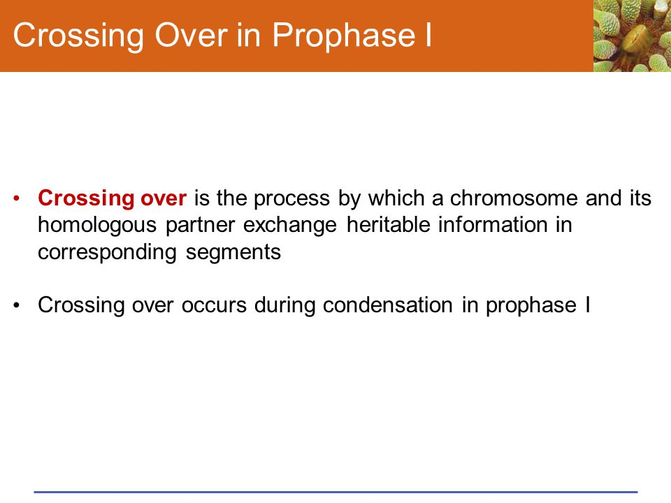 Crossing Over in Prophase I