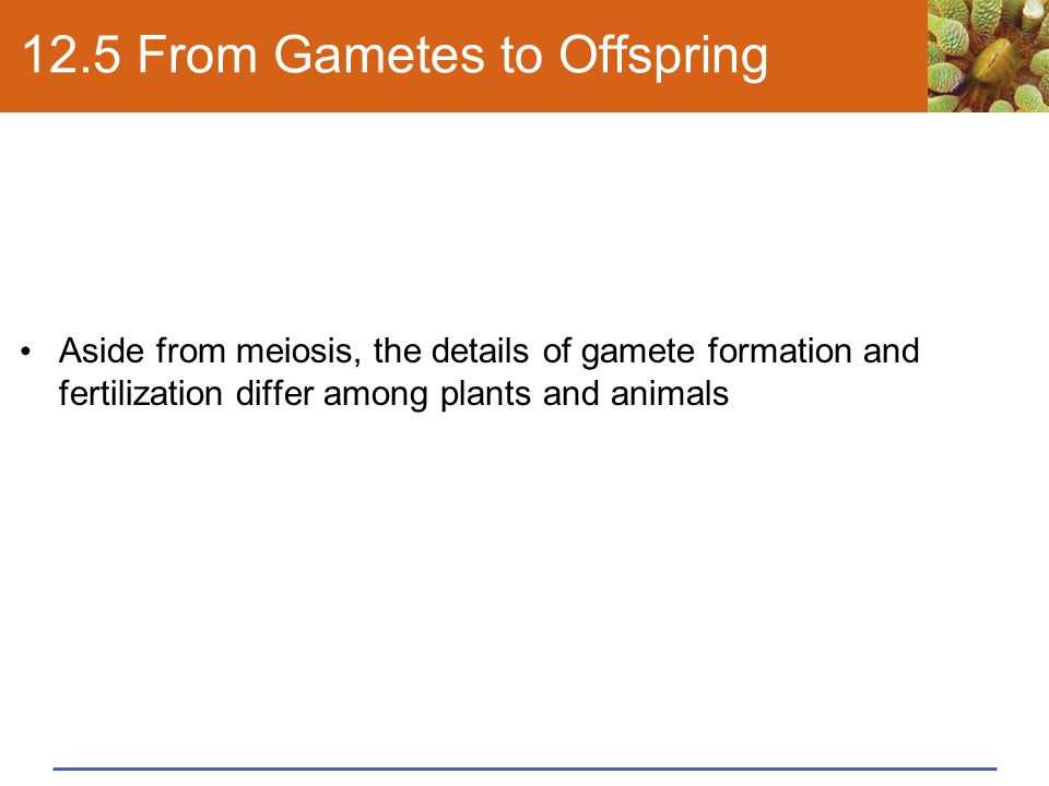 12.5 From Gametes to Offspring