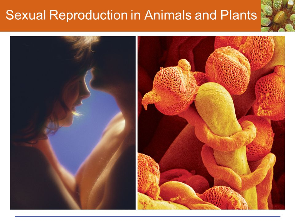 Sexual Reproduction in Animals and Plants