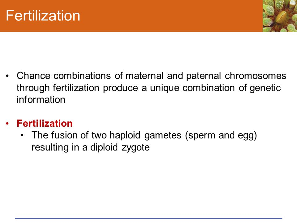 Fertilization Chance combinations of maternal and paternal chromosomes through fertilization produce a unique combination of genetic information.