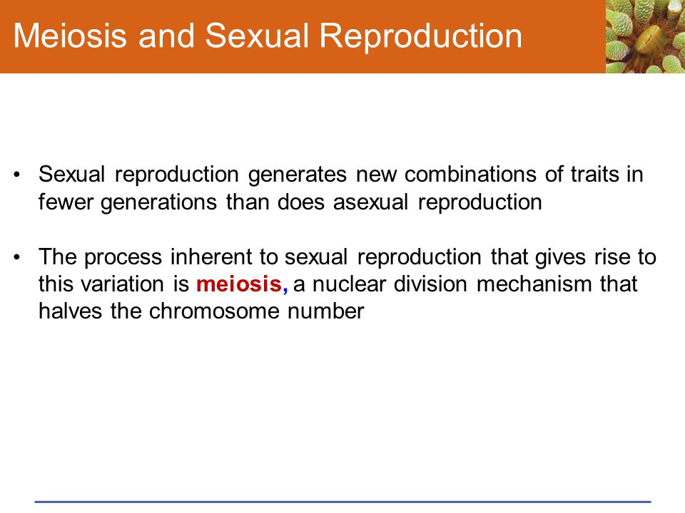 Meiosis and Sexual Reproduction