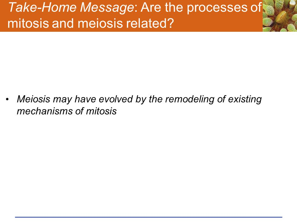 Take-Home Message: Are the processes of mitosis and meiosis related