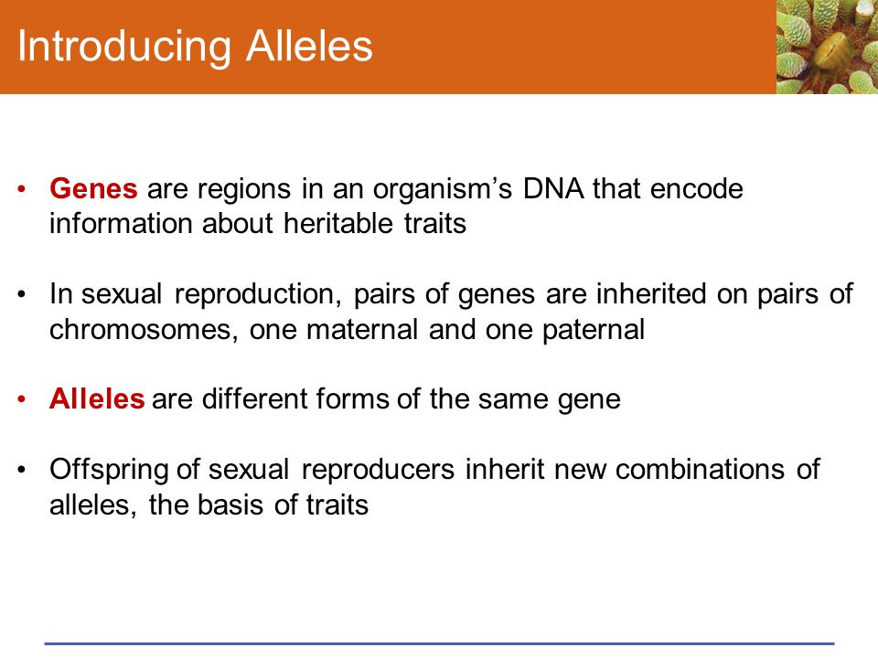 Introducing Alleles Genes are regions in an organism's DNA that encode information about heritable traits.