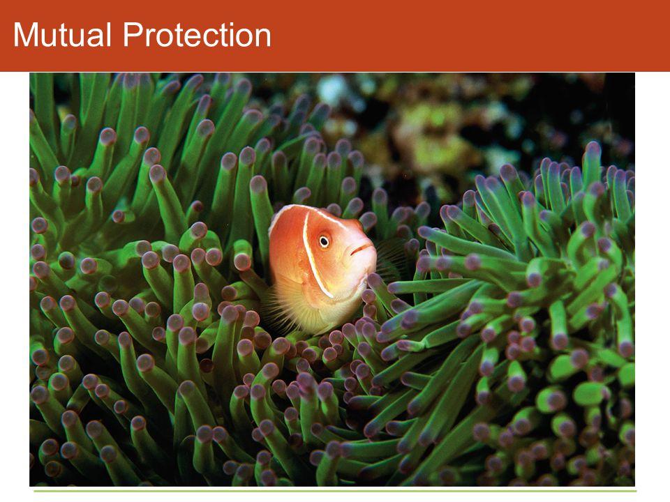 Mutual Protection