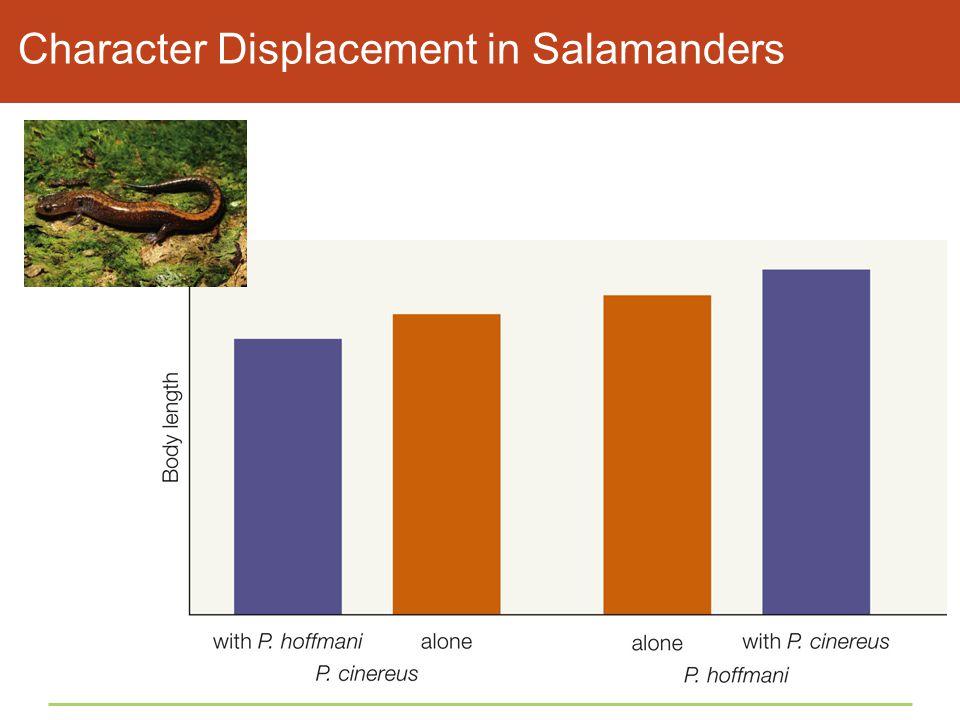 Character Displacement in Salamanders