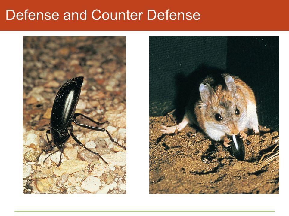 Defense and Counter Defense