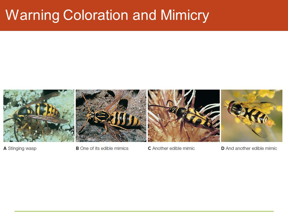 Warning Coloration and Mimicry
