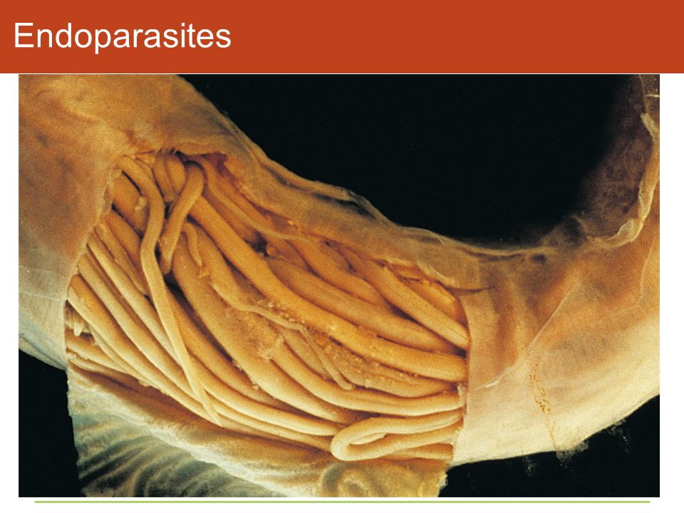 Endoparasites Figure 45.14 Parasites inside and out.