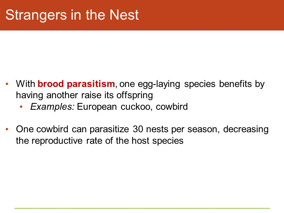Strangers in the Nest With brood parasitism, one egg-laying species benefits by having another raise its offspring.