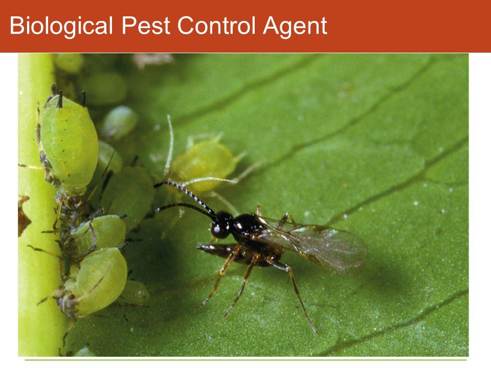 Biological Pest Control Agent