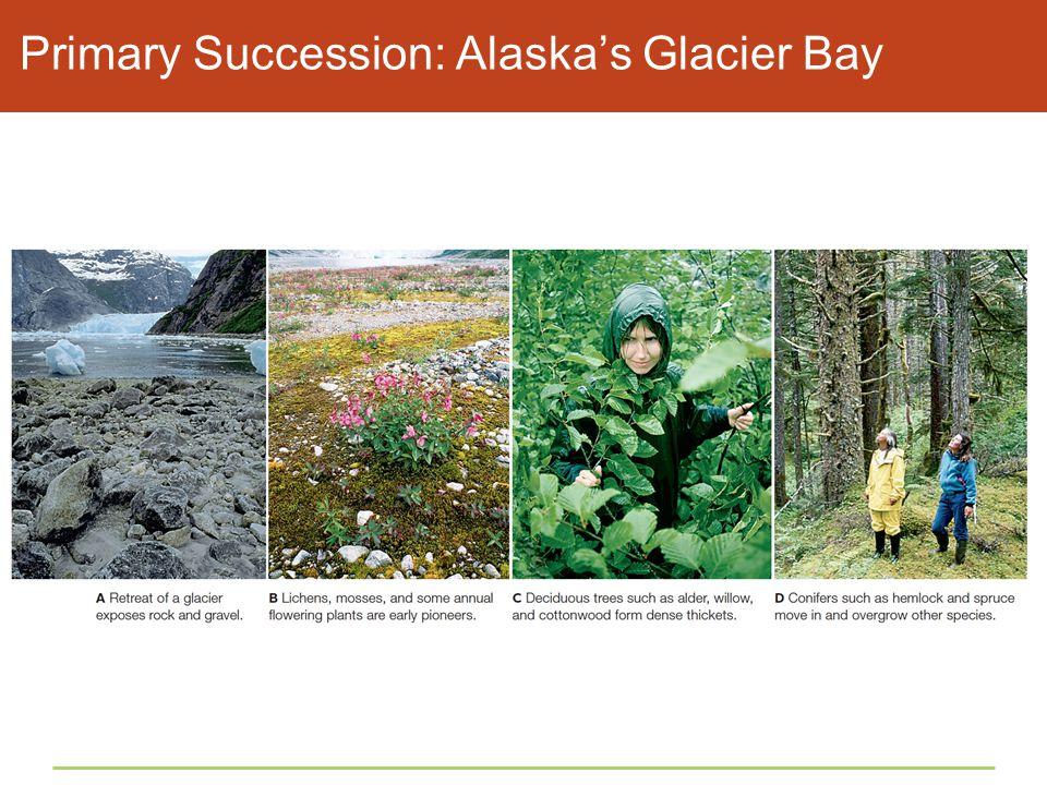 Primary Succession: Alaska's Glacier Bay