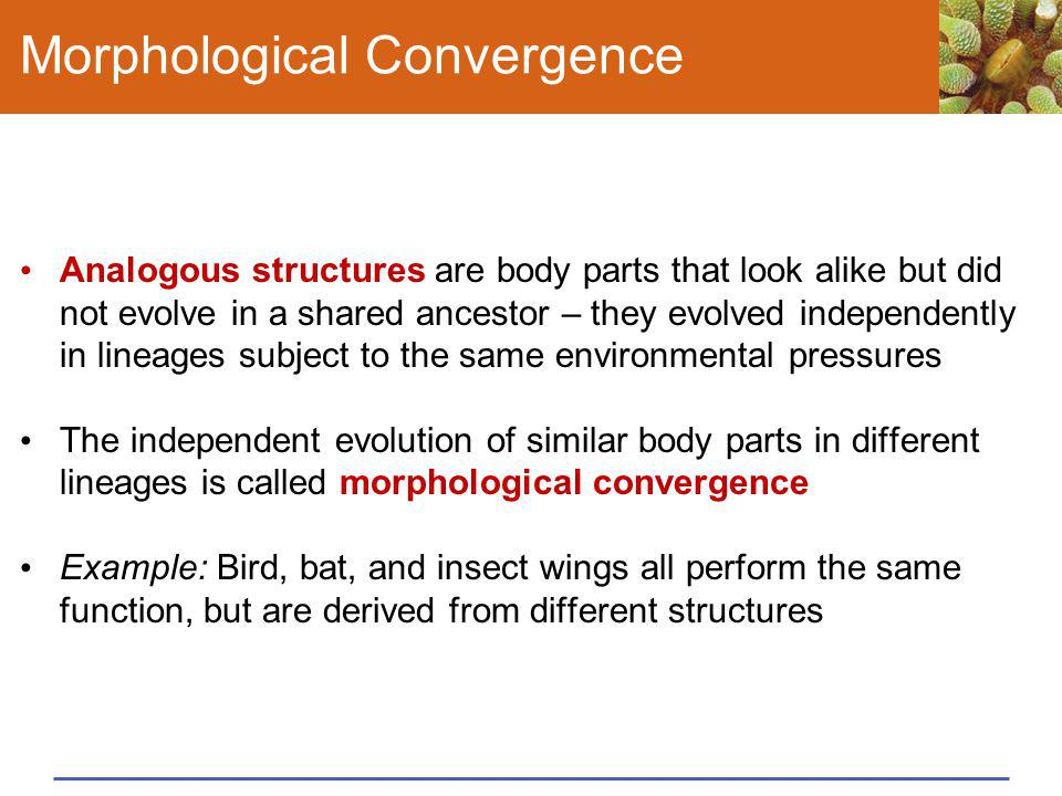 Morphological Convergence