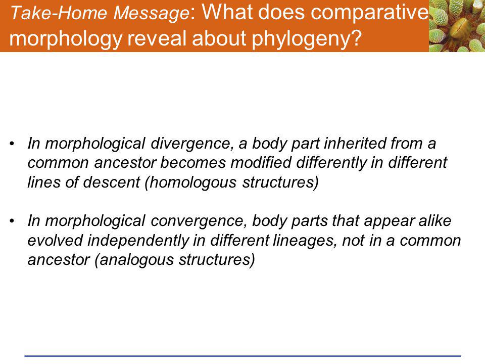 Take-Home Message: What does comparative morphology reveal about phylogeny