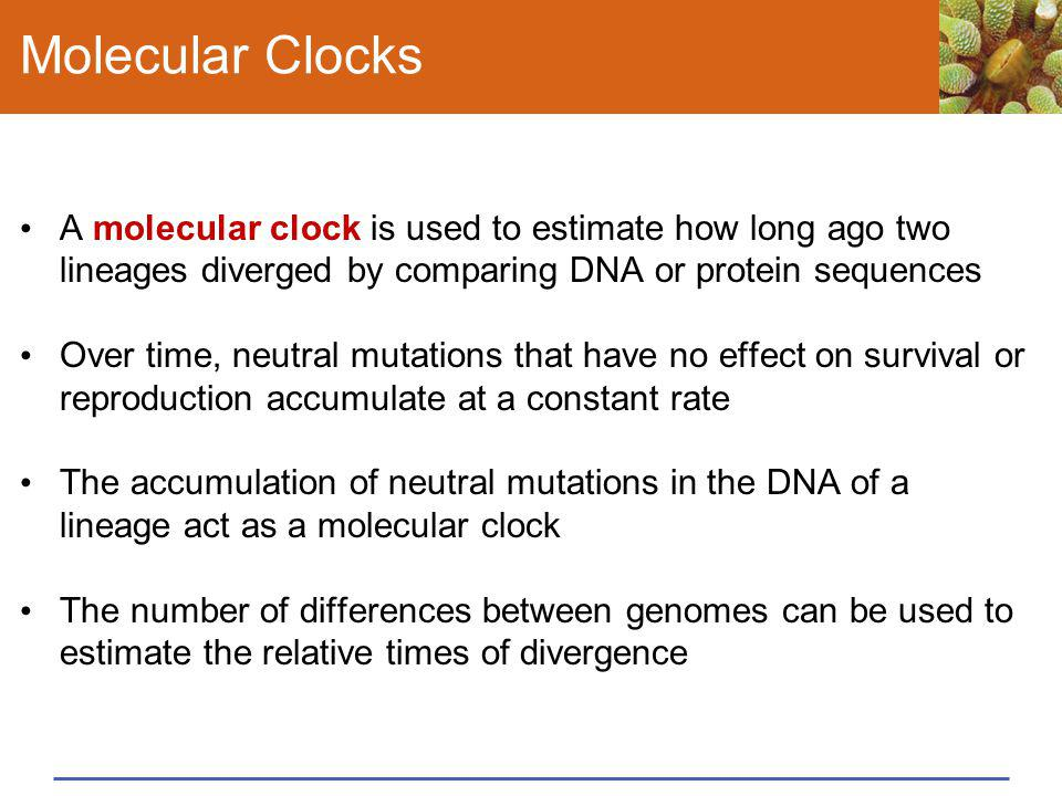 Molecular Clocks A molecular clock is used to estimate how long ago two lineages diverged by comparing DNA or protein sequences.