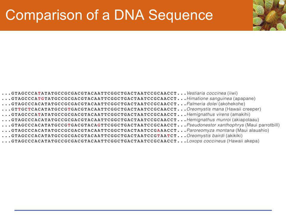 Comparison of a DNA Sequence