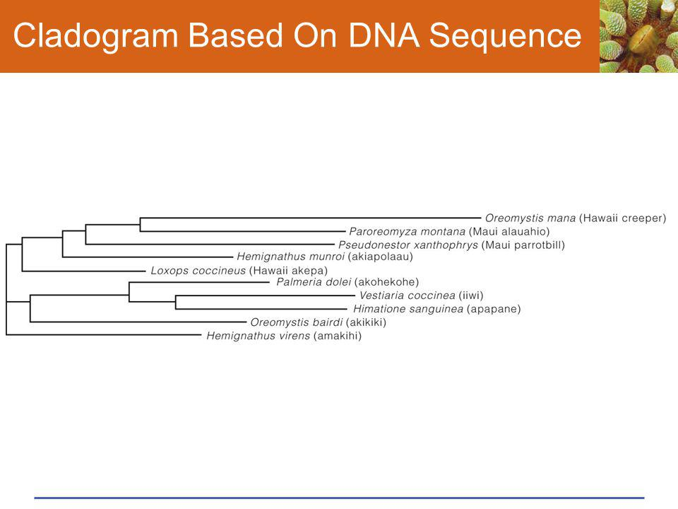 Cladogram Based On DNA Sequence