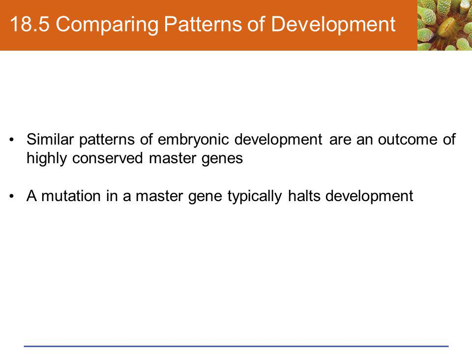 18.5 Comparing Patterns of Development