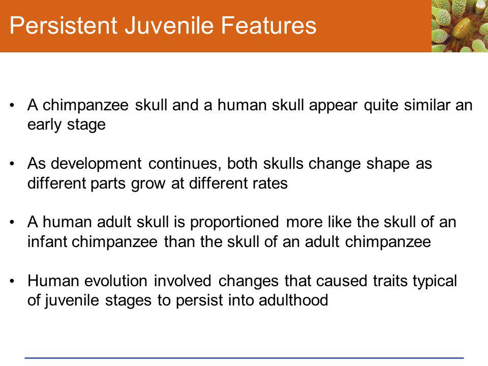 Persistent Juvenile Features