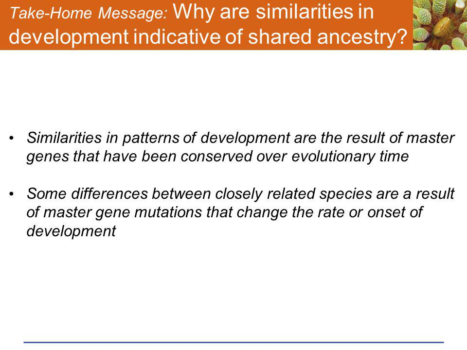 Take-Home Message: Why are similarities in development indicative of shared ancestry