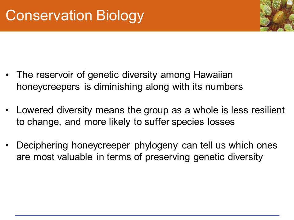 Conservation Biology The reservoir of genetic diversity among Hawaiian honeycreepers is diminishing along with its numbers.