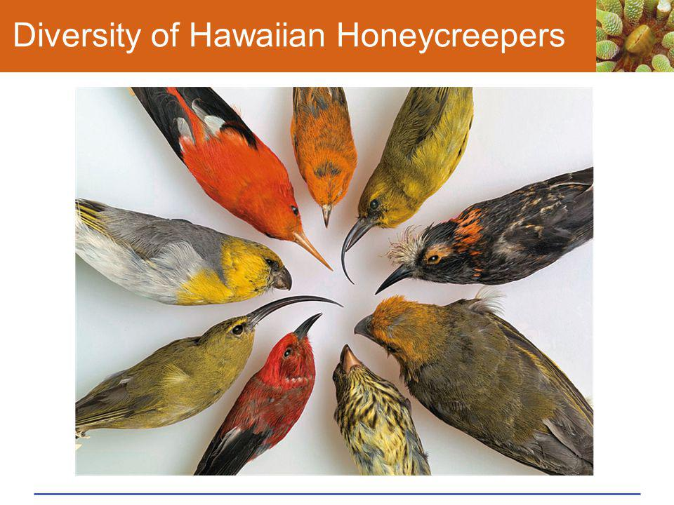 Diversity of Hawaiian Honeycreepers