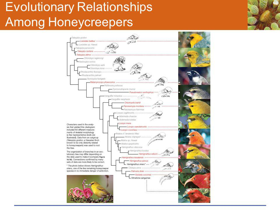 Evolutionary Relationships Among Honeycreepers