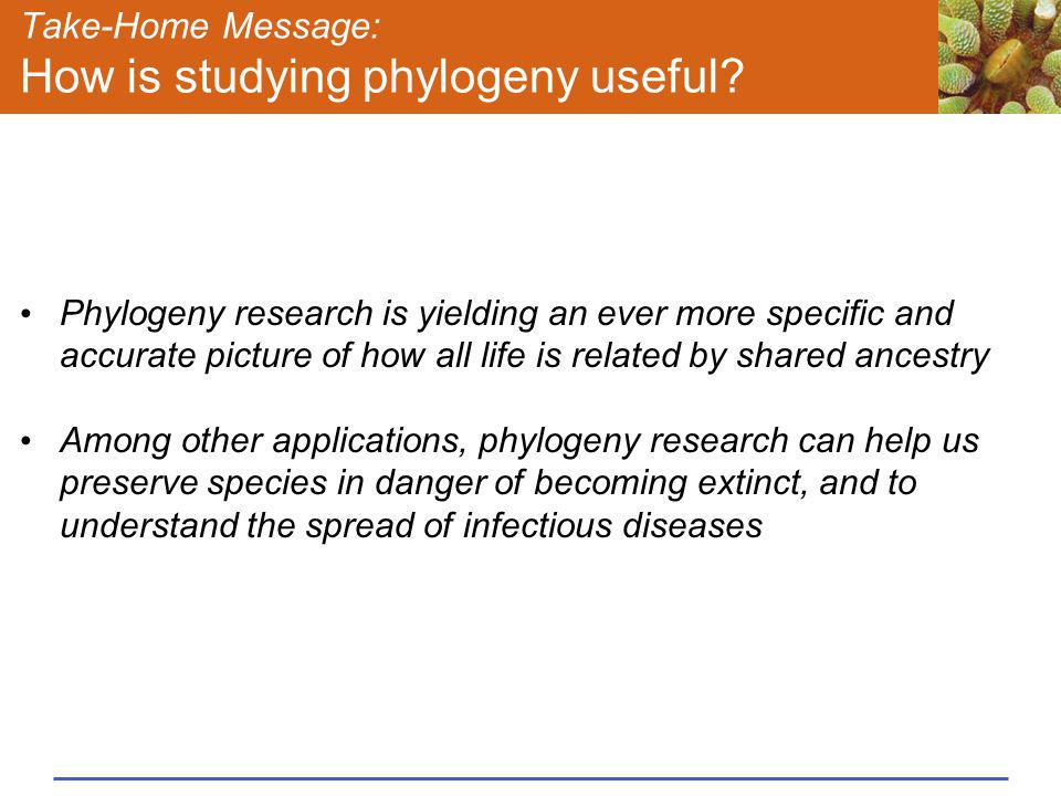 Take-Home Message: How is studying phylogeny useful