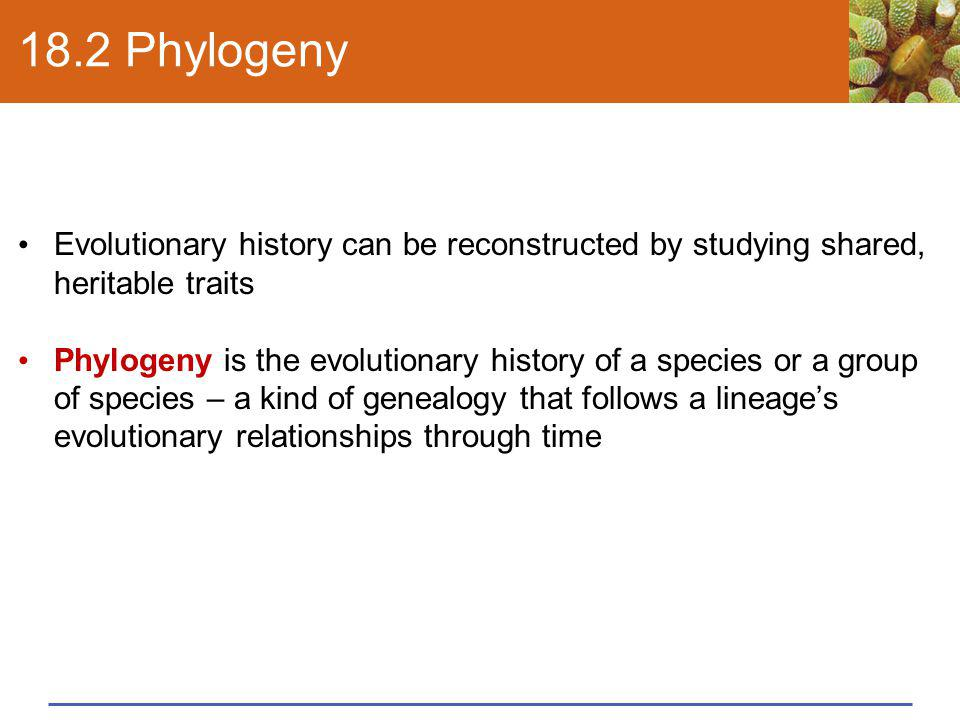 18.2 Phylogeny Evolutionary history can be reconstructed by studying shared, heritable traits.