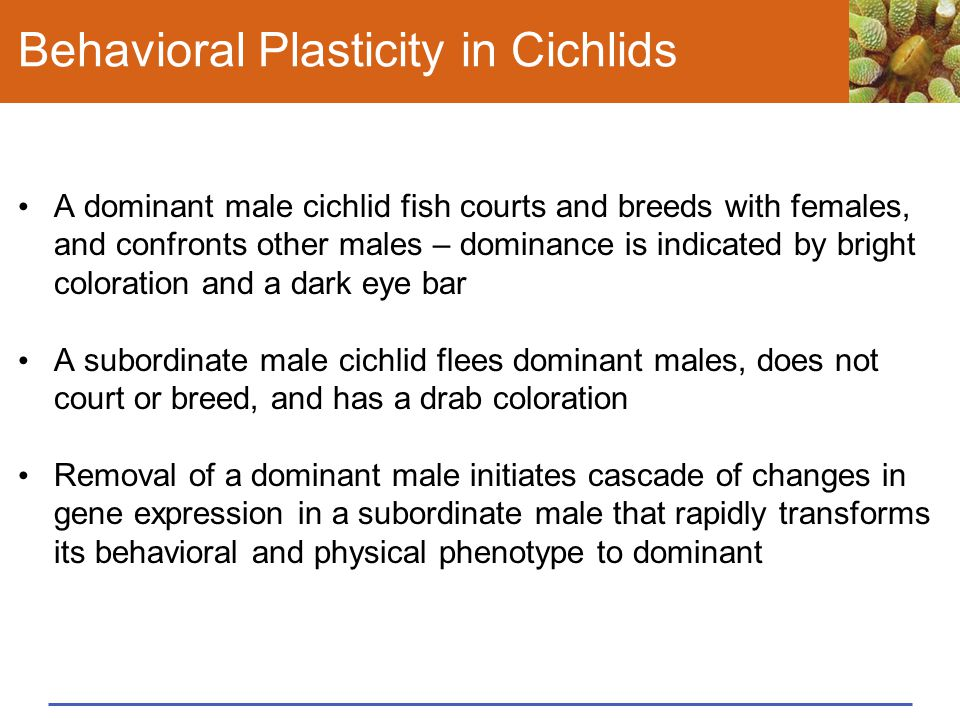 Behavioral Plasticity in Cichlids